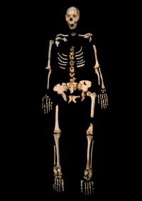 Esqueleto de uno de los 'Homo heidelbergensis' de la Sima de los Huesos