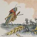 The Ant & The Grasshopper (illustration)